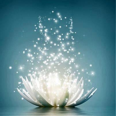 Sparkling Lotus